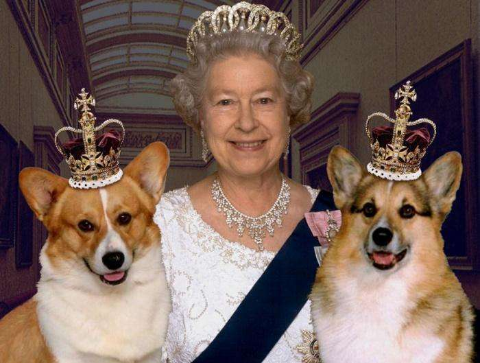 Собаки королевы англии порода